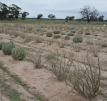 palatable-and-unpalatable-shrubs