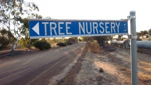 tree nursery sign